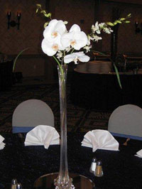 Orchids in a tall vase at a Maui banquet